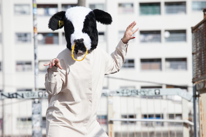 動揺する牛