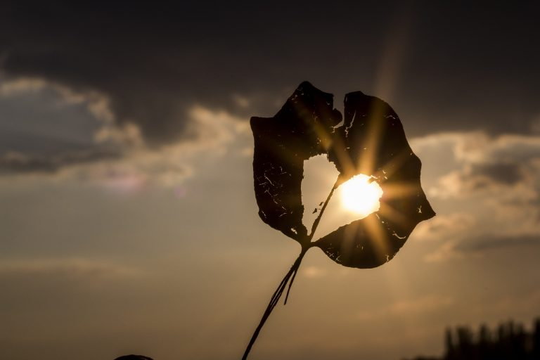 ハートの枯葉から覗く太陽