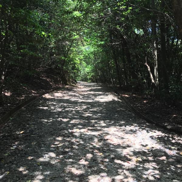 愛知県森林公園の植物園をまた散歩したい 自然に癒され 野生動物に驚きました 10