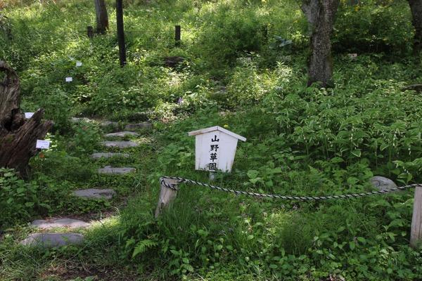 愛知県森林公園の植物園をまた散歩したい 自然に癒され 野生動物に驚きました 7