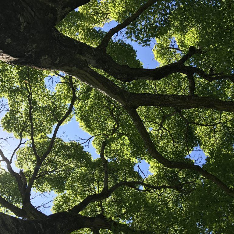 見上げたら木