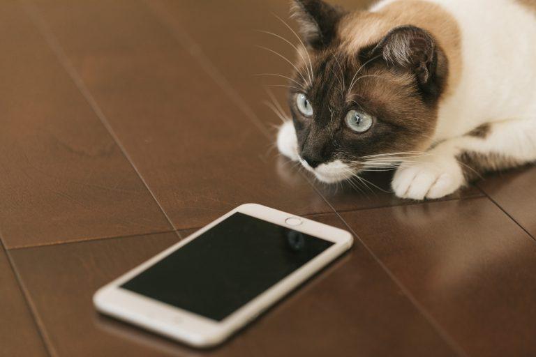 スマホの指紋認証に失敗する猫