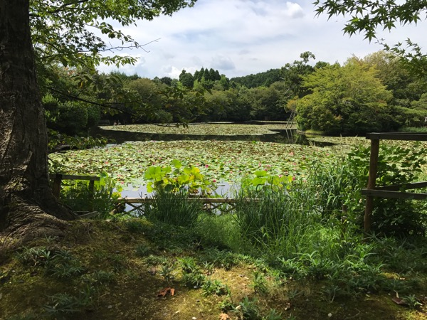 京都ぶらり観光の雑感 京都御所 龍安寺 仁和寺 1