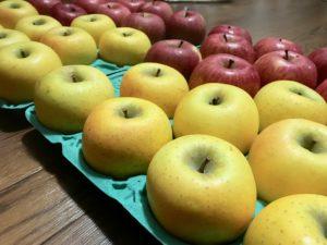ふるさと納税のお礼の品でリンゴ10キロを注文してみた感想