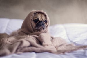 ベッドでうずくまる犬